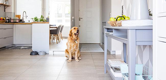 Dog Sitting White Interior Home