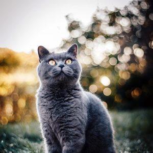 Temp Bubbles Cat