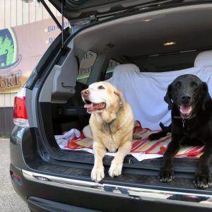 Dogs Chilling in Back of Car Outside Pet Resort
