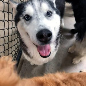 Happy Dog at CDA Pet Resort
